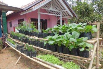 Lahan pekarangan yang sempitpun bisa dimanfaatkan untuk real budidaya