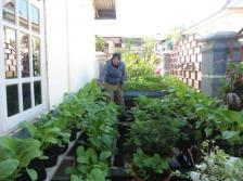 Memanfaatkan polybag, lahan sempit bisa jadi produktif