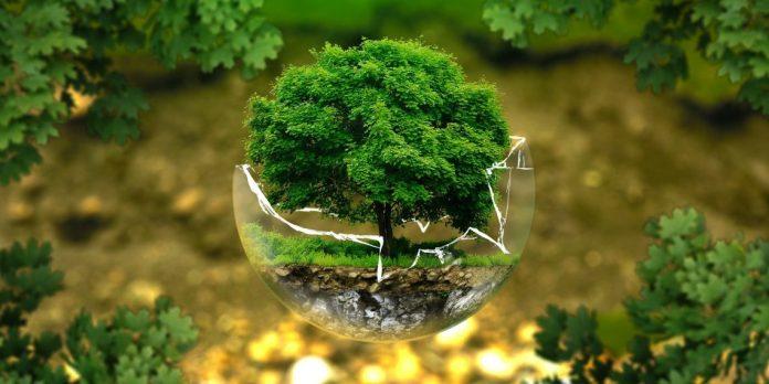 Mit számít egyáltalán, hogy változik az éghajlat – 10 tény amit tudnod kell a fák szerepéről