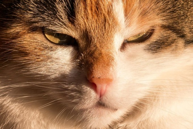 Kucing yang waspada