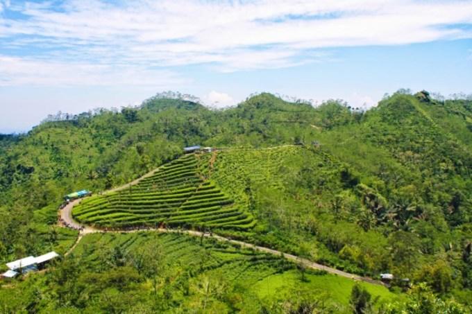 Kebun Teh Nglinggo Kulon Progo