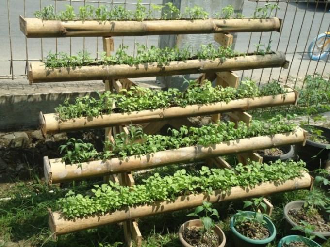 menanam di bambu
