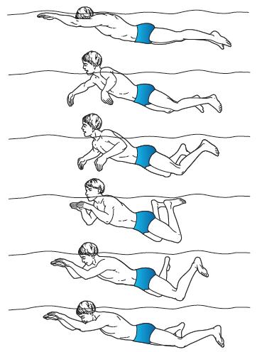 Renang gaya katak atau gaya dada