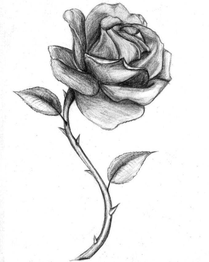 Gambar mawar dari pensil