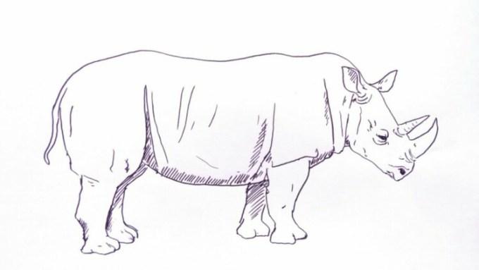 Sketsa badak
