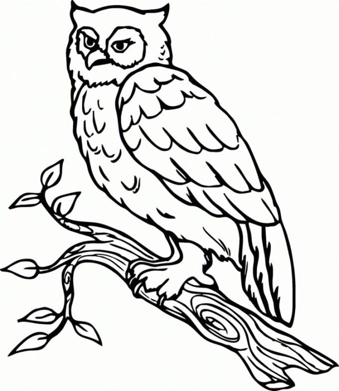 Sketsa hewan burung hantu