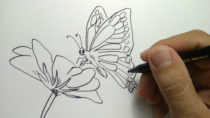 Sketsa kupu kupu dan bunga