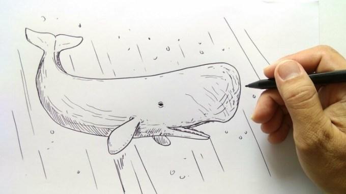 Gambar sketsa hewan paus