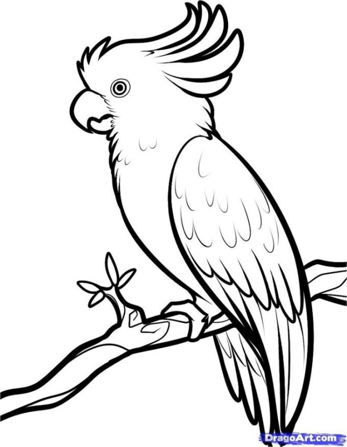 Contoh Gambar Burung : contoh, gambar, burung, Melukis, Burung, Kakak