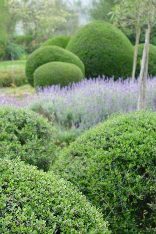 Mallorca-topiary-garden-design