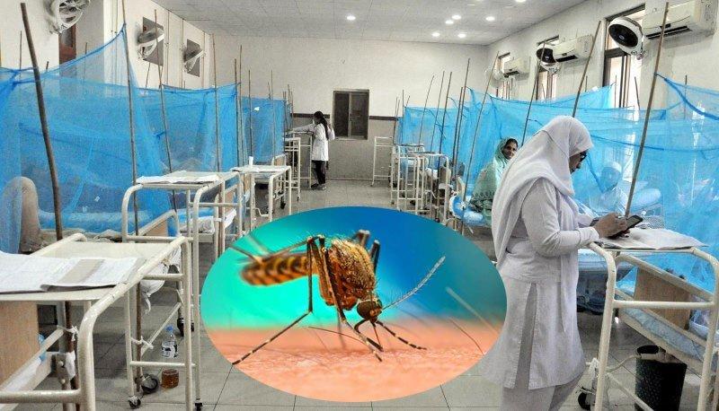 dengue, alert issued in 8 major cities