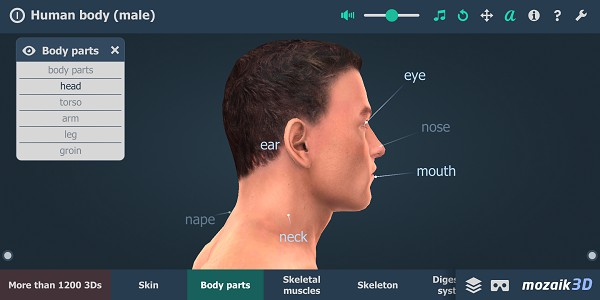 android Human Body (male) Educational VR 3D