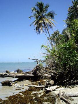 2 Parque nacional Cahuita