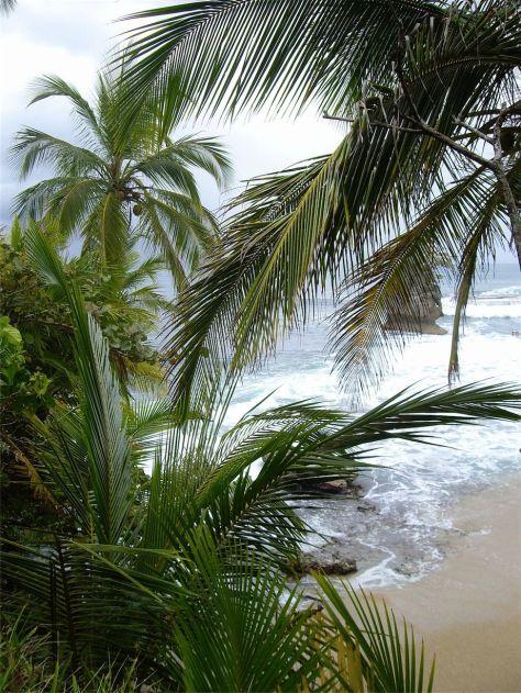 3 Cocoteros del caribe
