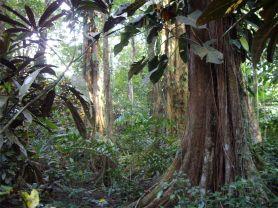 5 Magníficos arboles en la selva