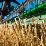 Trigo y cebada: mejor rendimiento que el ciclo anterior