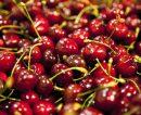 La provincia registró un importante crecimiento en la exportación de cerezas