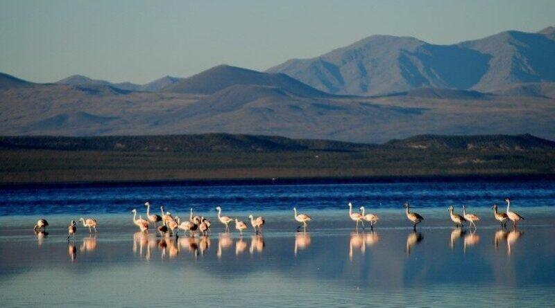 Concurso del Agua Humedal en Mendoza