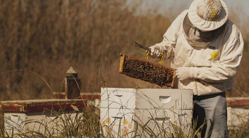 El precio histórico de la miel impulsa inversiones en toda la cadena apícola