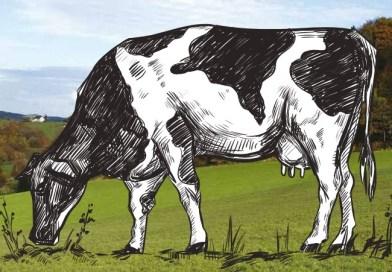 Producción lechera argentina: radiografía de un sector errático