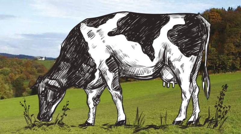producción lechera argentina