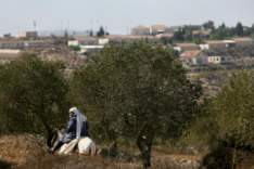 Jewish Rabbis And Foreign Volunteers Protect Palestinian Olive Harvest