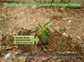 bina lingkungan dan tanaman konservasi desa papringan kecamatan banyumas (19)
