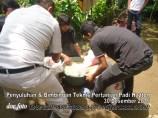 Penyuluhan dan bimbingan tehnis padi hazton (7)