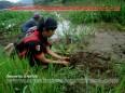 Pemuda Pancasila PAC Patikraja Banyumas Menanam Tanaman di Desa Patikraja Bersama Komunitas Wong Apa Memperingati Hari Bumi 2016 (31)