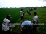Penghijauan Desa Randegan Kecamatan Kebasen Banyumas Dalam Rangka Keanekaragaman Hayati 2016 (24)
