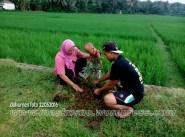 Penghijauan Desa Randegan Kecamatan Kebasen Banyumas Dalam Rangka Keanekaragaman Hayati 2016 (26)