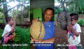 Studi Banding Peningkatan Kapasitas dan Penguatan Inisiatif Pengelola Hkm Kabupaten Tanggamus Lampung ( Budidaya Durian Bawor Banyumas ) (5)
