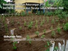 Pemanfaatan Tanah Pekarangan(PTP) Program PKK (17)