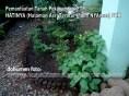 Pemanfaatan Tanah Pekarangan(PTP) Program PKK (2)