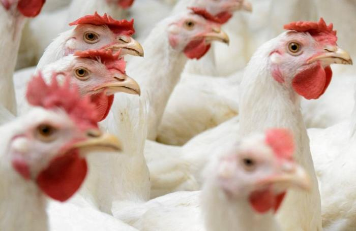 Something good is happening to the poultry industry