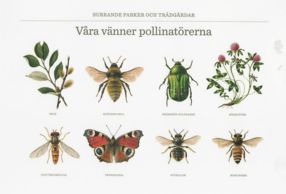 Bild på våra vänner pollinatörerna
