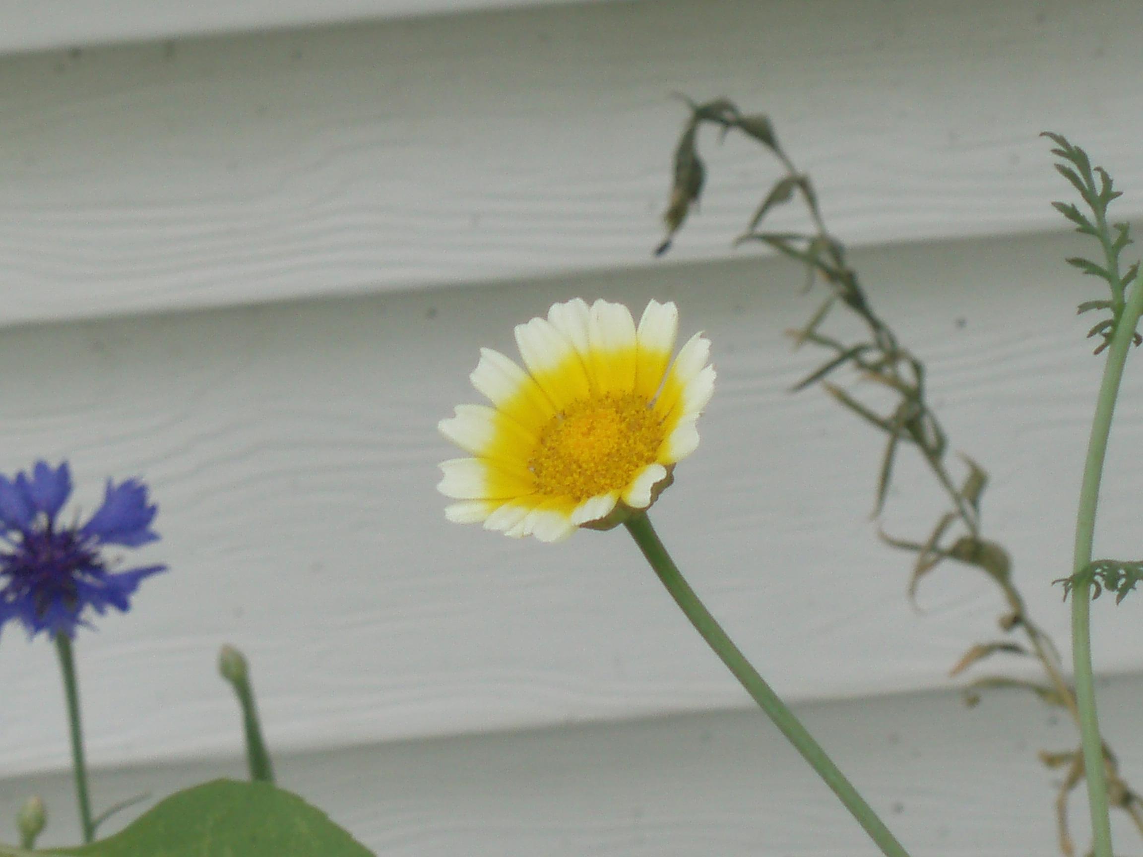 P7270168