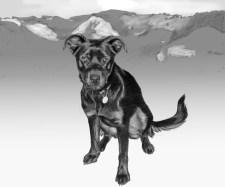 malq yard dog sketch