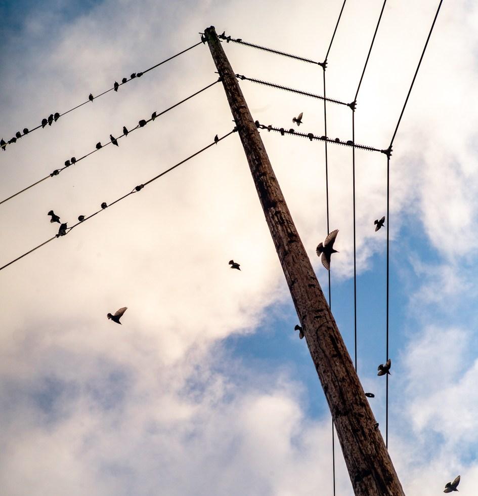 POV of telephone and birds.