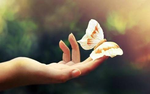 papillon main tendue liberté ouvrir les yeux