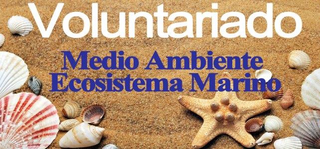 Voluntariados en conservación del medio ambiente marino & ecosistema marino