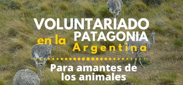 Voluntariado en la Patagonia – Para los amantes de los animales