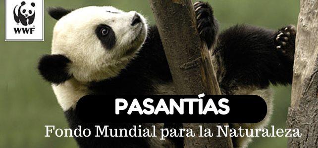 Pasantía con WWF – Fondo Mundial para la Naturaleza