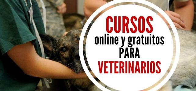Cursos online y gratuitos para veterinarios – ideal para amantes y cuidadores de animales