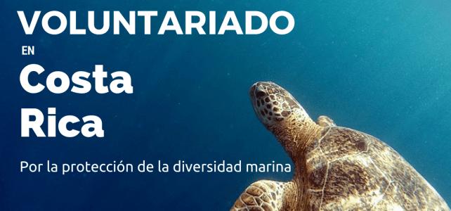 Voluntariado con tortugas marinas en Costa Rica