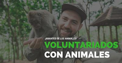 Voluntariado con animales – sin restricción de nacionalidad