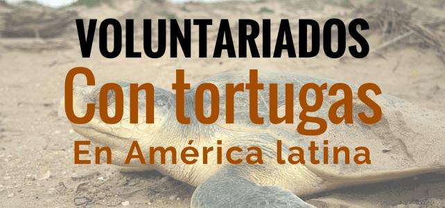 Voluntariado con tortugas en Costa Rica