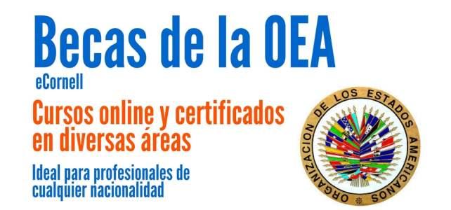 Becas de la OEA para cursos online certificados en diferentes áreas