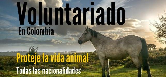 Voluntariado para personas que les gusta proteger la vida animal