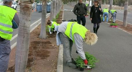 Vecindario invierte 6.000 euros en 8.500 geranios para embellecer la circunvalación